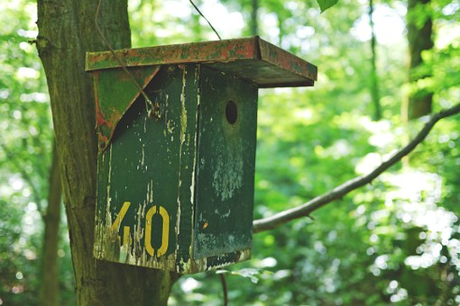 Aviary, Bird, Bird Feeder, Cottage, Nesting Place