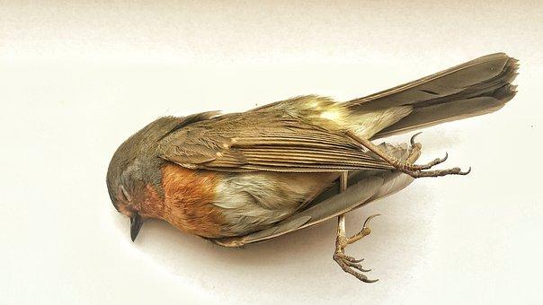 Dead, Bird, Loneliness, Sadness, Environmental