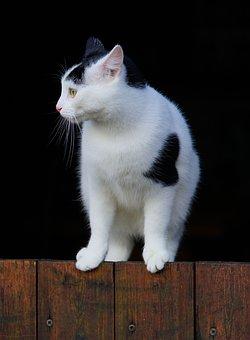 Cat, Domestic Cat, Pet, Kitten, Animal, Dear, Cat Face