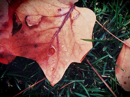 Leaf, Autumn, Color, Drop, Grass, Rain, Tree, Colors