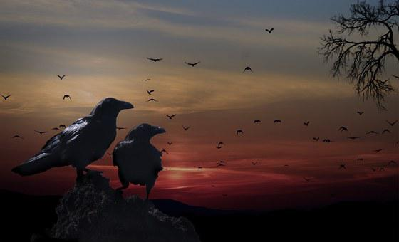 Crows, Birds, Sunset, Tree, Branches, Scenery, Evening