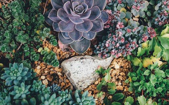 Succulents, Plants, Garden, Nature, Botanical, Flora