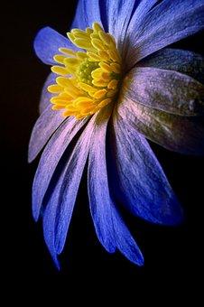 Flower, Digital Art, Computer Graphic, Artwork