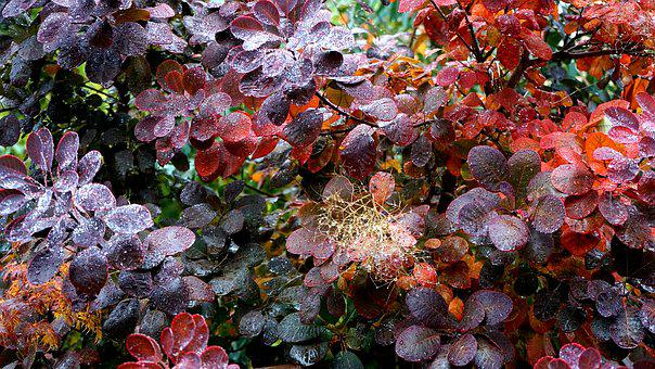 Plant, Rain, Nature, Green, Season, Leaf, Fresh