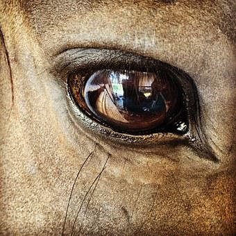 The Horse, Eye, Village, Snout, Animal, Harness Riding
