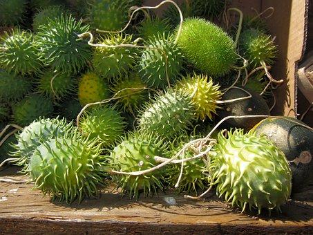 Chayote, Hedgehog Cucumber, Vegetables