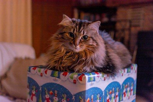 Cat, Pet, Animal, Cute, Kitten, Domestic, Feline