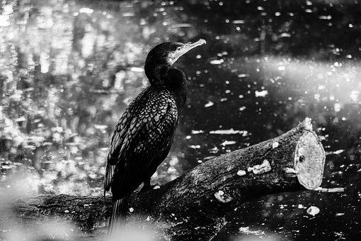 Bird, Monotonous, Black, White, Zoo, Contrast, Water