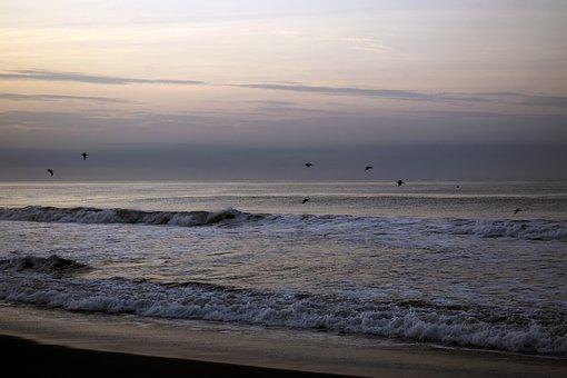 Bird, Flying, Beach, Sea, Waves, Animals, Birds