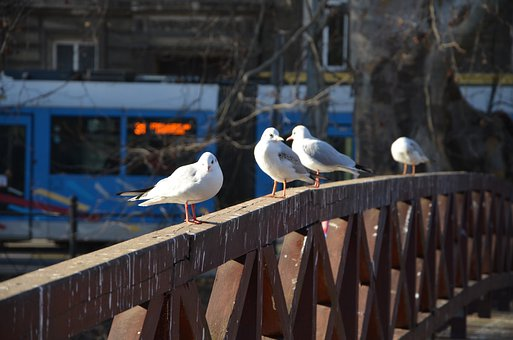 Gulls, Bridge, Seagull, Bird, City