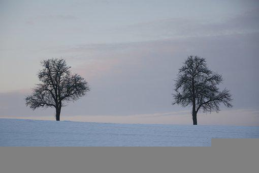 Winter, Cold, Nature, Ice, Snow, Frost, Wintry