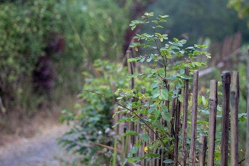 Green, Plants, Fence, Forest, Flower, Garden, Sunrise