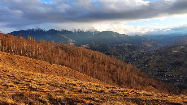 Mountains, Trees, Forest, Hills, Grass, Dry, Winter