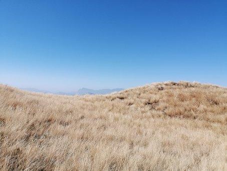 Grassland, Shrubland, Nature, Grass, Field, Meadow