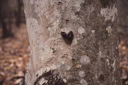 Tree, Love, Heart, Couple, Nature, Romance, Happy
