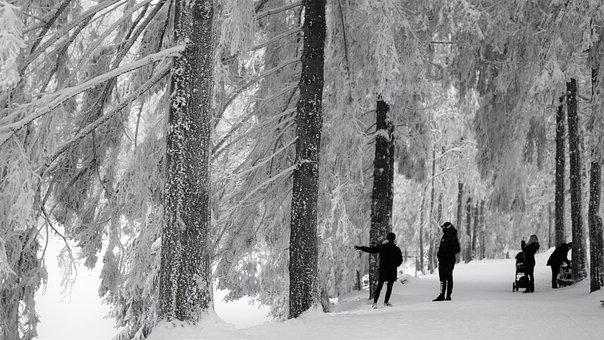 Winter, Human, Snow, Snow Landscape, Avenue, Walk