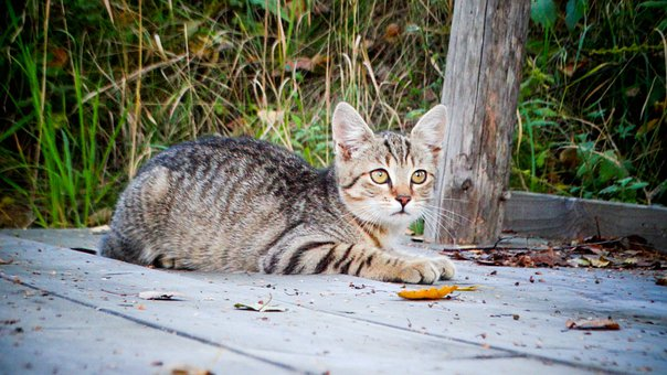Cat, Kitten, Animals, Pet, Face, Fur, Portrait, Cute