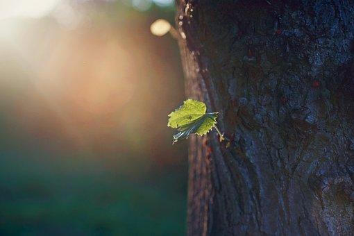 Tree, Leaves, Trunk, Bark, Foliage, Nature, Green