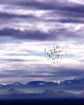 Dawn, Birds, Flock, Flying, Sky, Sunrise, Mountains