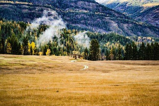 Washington, Ione Wa, Forest, Wilderness, Landscape