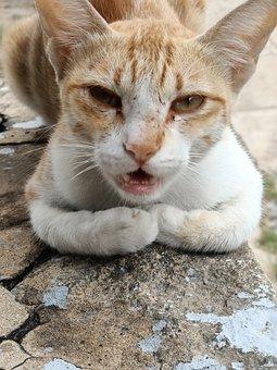 Cat, Animal, Pet An, Pet, Kitten, Cute, Portrait