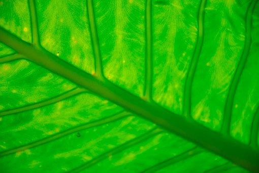 Garden, Botanic, Botanical, Vegetation, Green, Colorful