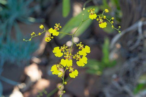 Flower, Garden, Botanic, Botanical, Vegetation, Green