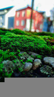 Moss, Green, Forest, Nature, Growth, Shadow, Wonderful