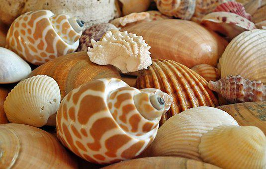 Shells, Sea, Ocean, Cover, Holidays, Nature, Marine
