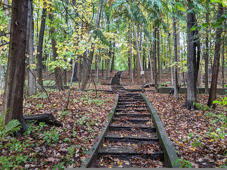 Forest, Stairs, Nature, Path, Enchanted, Autumn, Summer