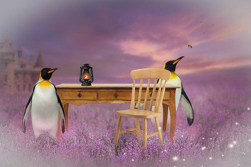 Digital Background, Photo Editing, Penguin, Lights