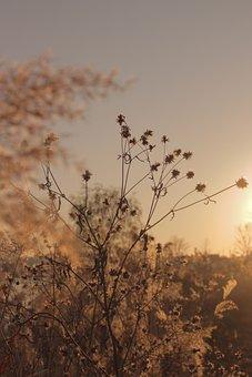 Sunlight, Wind, Riverside, Grass, Plants, Dry Grass