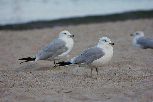 Beach, Sand, Seagulls, Summer, Ocean, Nature, Water