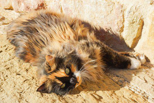 Cat, Relax, Sleep, Tired, Relaxation, Pet, Animal