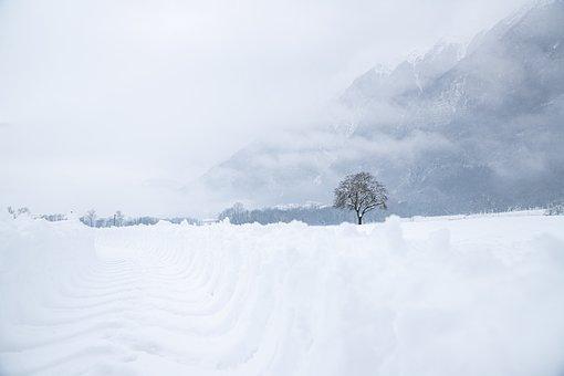 Snow, Winter, Tree, Landscape, Nature, White