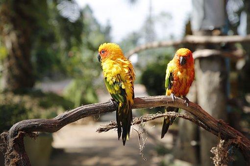 Parrots, Birds, Thailand, Exotic, Colorful, Wing, Pen
