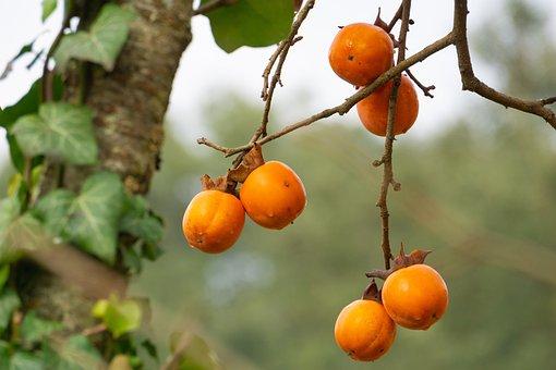 Fruit, Silvestre, Nature, Tree, Botanist, Vegetation