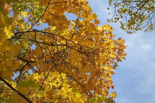 Krone, Park, Nature, Trunk, Tree, Foliage, Sunny