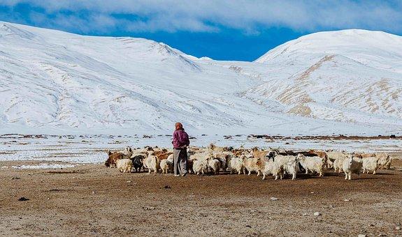 Ladakh, Himalaya, Mountains, Nature, Landscape, Valley