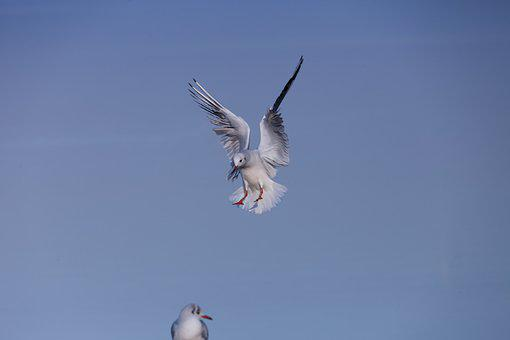 Nature, Bird, Wing, Flight, Landing, Water Bird