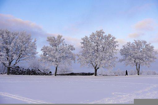 Winter, Landscape, Trees, Nature, Cold, Snow