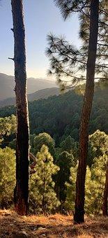 Tree, Trees, Leaves, Jungle, Jungles, Wood, Woods
