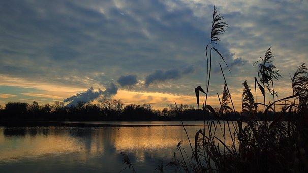 Sunset, River, Reeds, Reedy, Bank, River Bank, Clouds