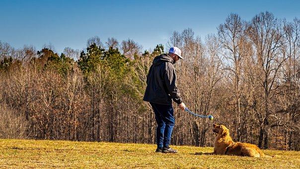 Dog, Canine, Dog Training, Golden Retriever