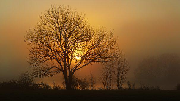 Fog, Trees, Sunrise, Sun, Dawn, Morning Fog, Foggy