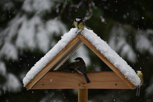 Bird, Birds, Tit, Tits, Winter, Feed, Manger, Snow