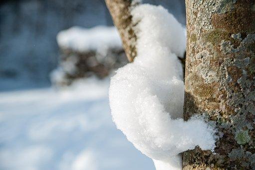 Tree, Trunk, Snow, Tree Bark, Bark, Tree Trunk, Snowy