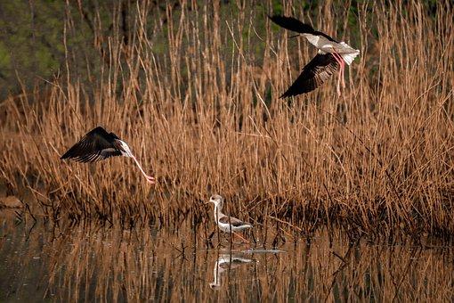 Birds, Grass, River, Lake, Sunrise, Nature, Water
