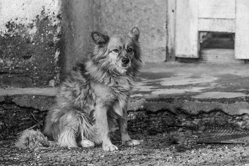 Dog, Old Dog, Street Dog, Poor Dog, Animal