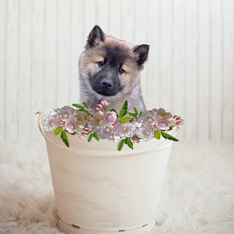Puppy, Bucket, Animal, Dog, Pet, Cute, Adorable, Canine